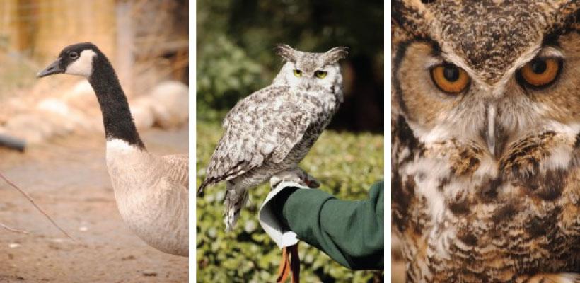 Calgary-Wildlife-Rehabilitation-Society---1