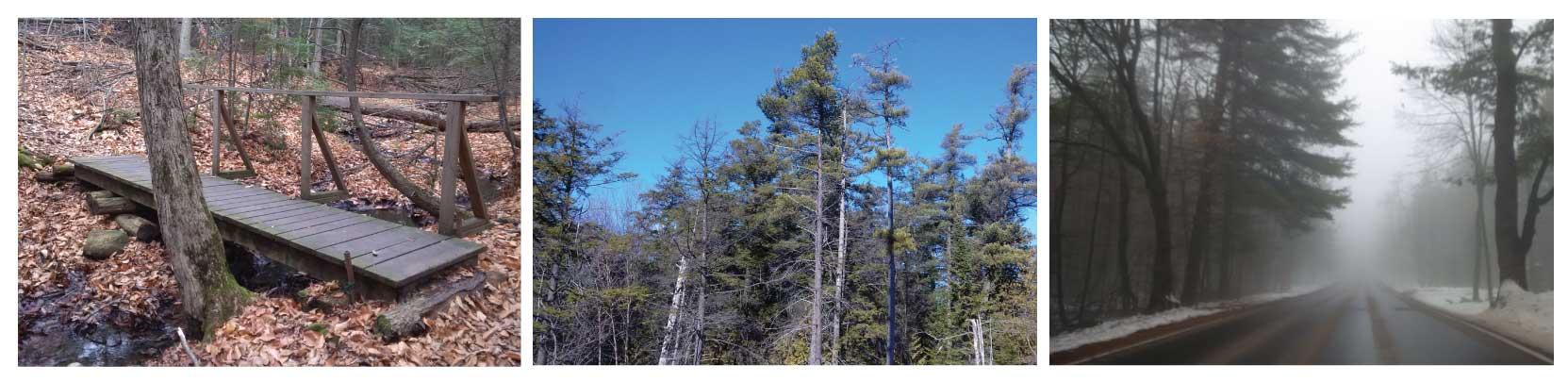 Oak Ridges Trail Association Collage