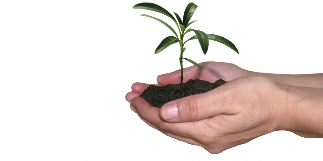 Small green plant with soil in the palm of persons hand