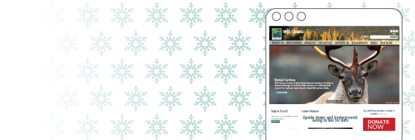 Snowflakes-and-Donate-Now-Button-Email-Banner