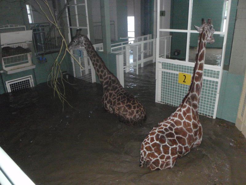 Zoo-flood-2013-015-(1)