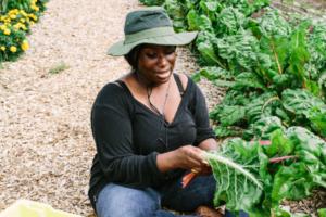 A woman sitting cross legged in a field gathering lettuce leaves
