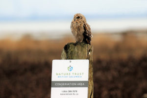 """An owl sitting on top of a wooden post with a sign that says """"Nature Trust British Columbia Conservation Area"""""""
