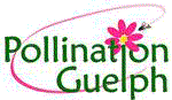Pollination Guelph