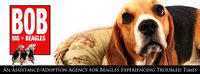 BIG ON BEAGLES RESCUE